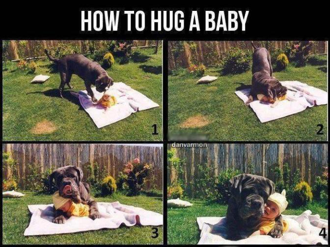 A Dog's Guide to Hugging a Baby